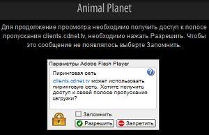 разрешение для flash player